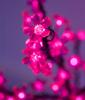 Дерево светодиодное Сакура 2м 936 LED